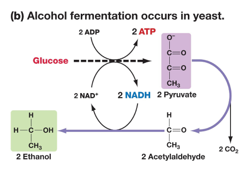 alcohol-fermentation
